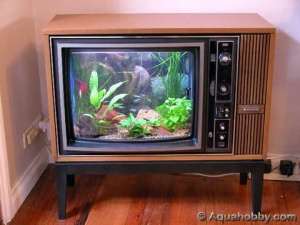 Fish tank in a vintage TV